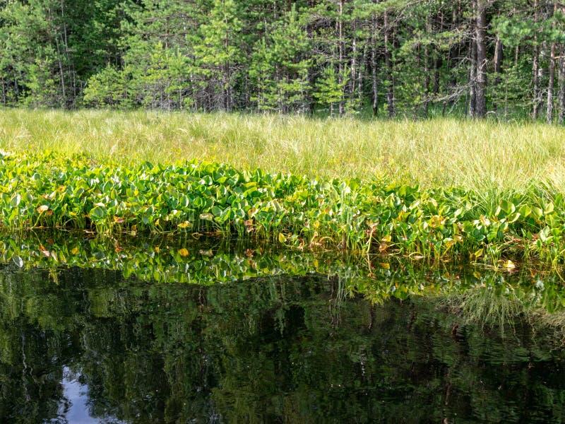 Залы озера красиво стоковая фотография rf