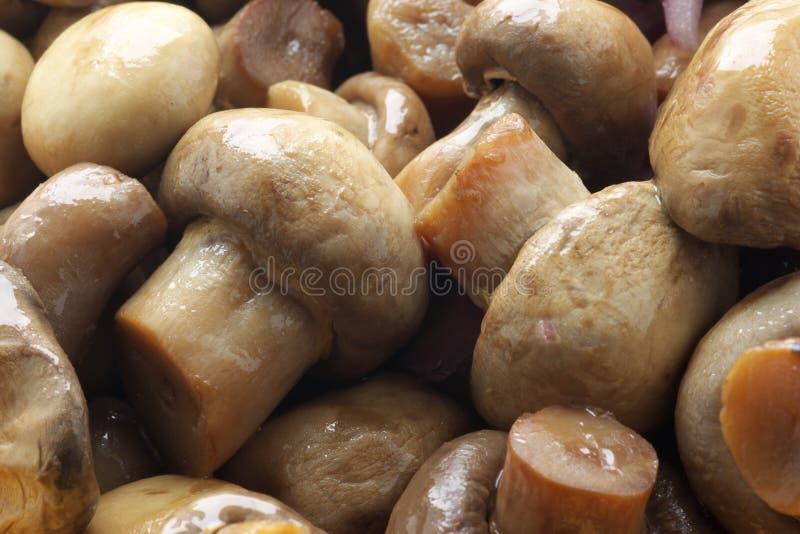 замаринованные грибы стоковые фото