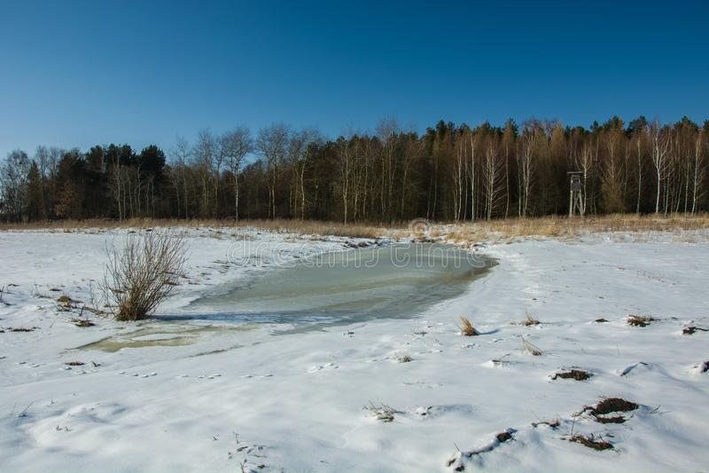 Замерли вода, снег и лес стоковые фото