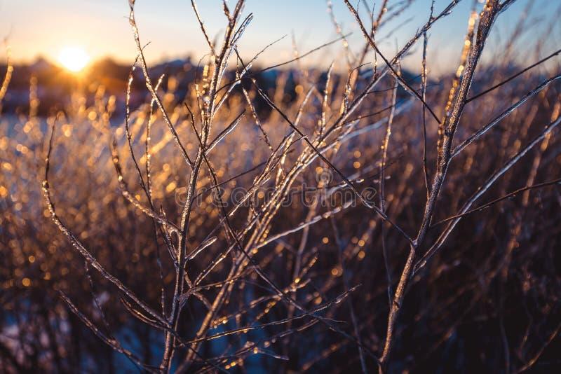 Замерли красивые заводы предусматриванные с сосульками в солнечном свете зима белизны снежинок предпосылки голубая Селективный фо стоковое фото