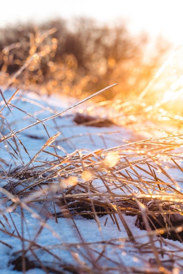 Замерли красивые заводы предусматриванные с сосульками в солнечном свете зима белизны снежинок предпосылки голубая Селективный фо стоковые изображения