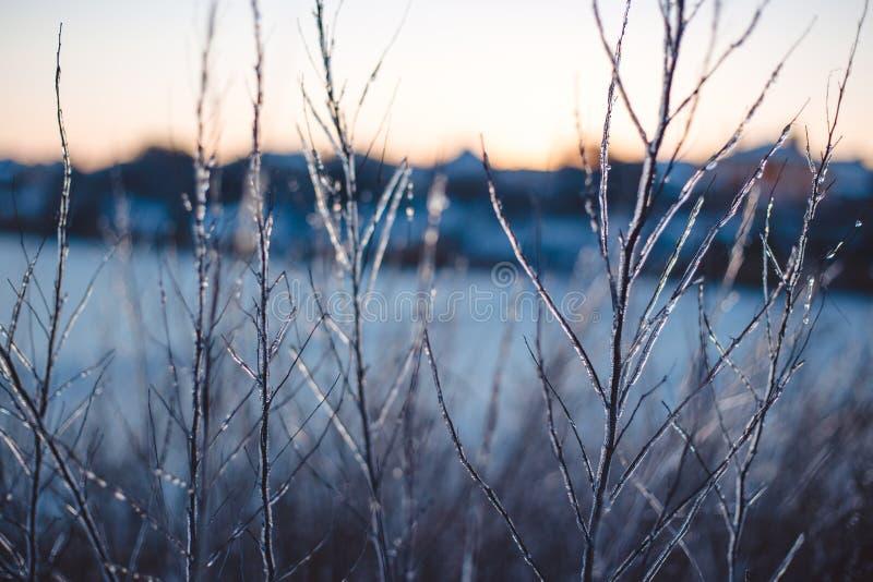 Замерли красивые заводы предусматриванные с сосульками зима белизны снежинок предпосылки голубая Селективный фокус поле глубины о стоковое изображение