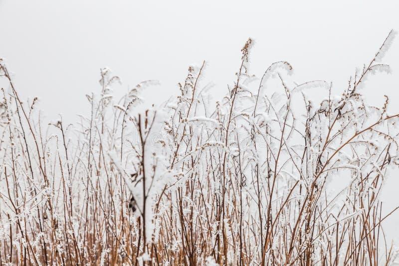 Замерли ландшафт зимы в Сычуань, Китае стоковые фотографии rf