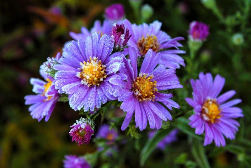 замерли цветки, котор стоковое изображение