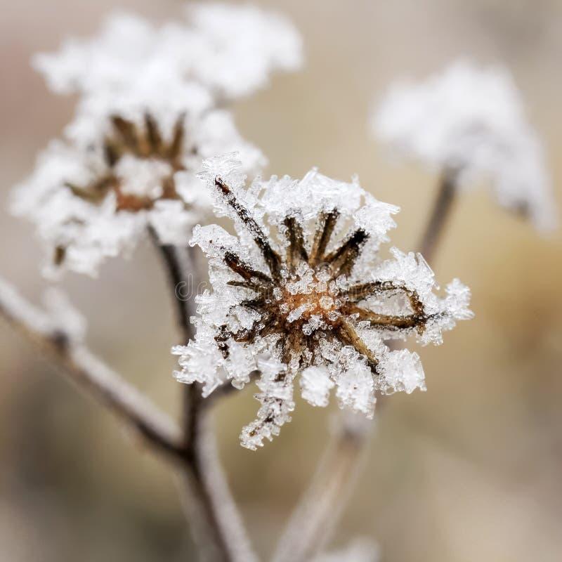 замерли цветок, котор стоковое фото