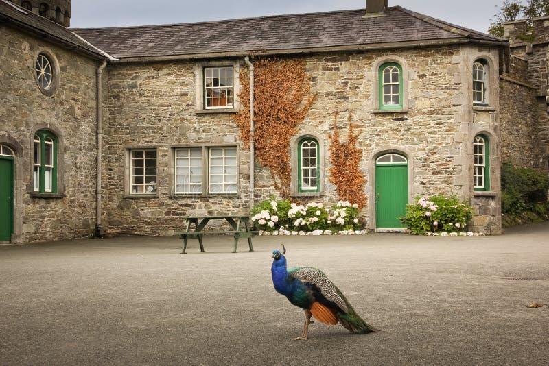 Замок Джонстаун графство Wexford Ирландия стоковое изображение