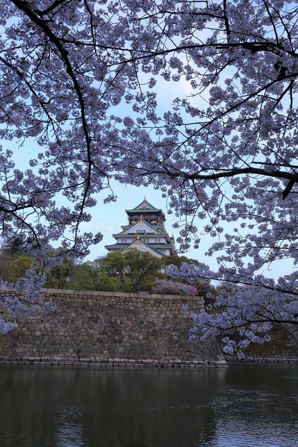 Замок и Сакура Осака в Осака стоковая фотография