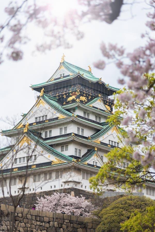Замок Японии Осака с вишневым цветом японско стоковые изображения
