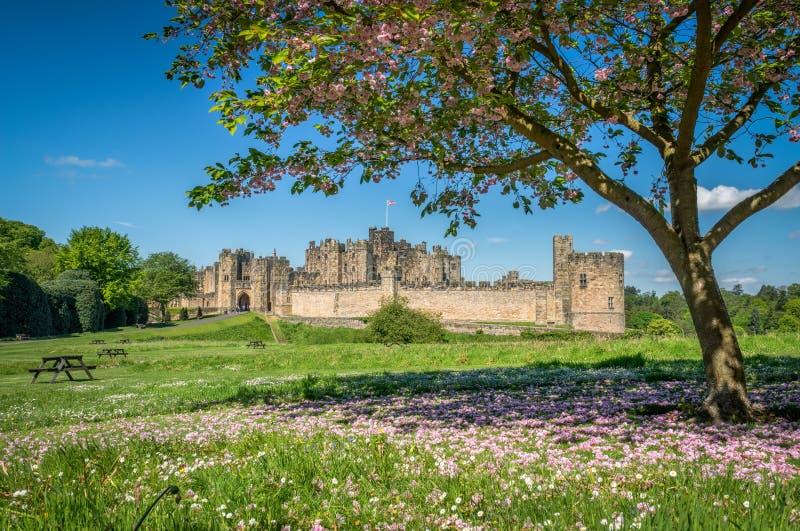 Замок Alnwick, Англия стоковые фотографии rf