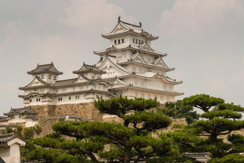 Замок Himeji с соснами стоковые фото