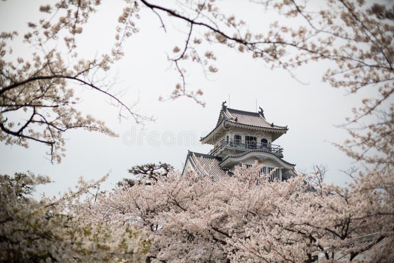 Замок Nagahama с Сакурой (вишневым цветом) на Ho парке - Nagaha стоковое изображение
