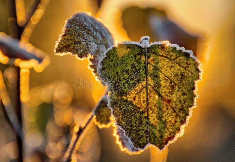 Замороженная ветвь березы стоковые фото