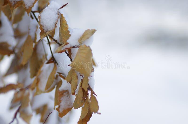 Замороженная ветвь дерева в зиме стоковые фото