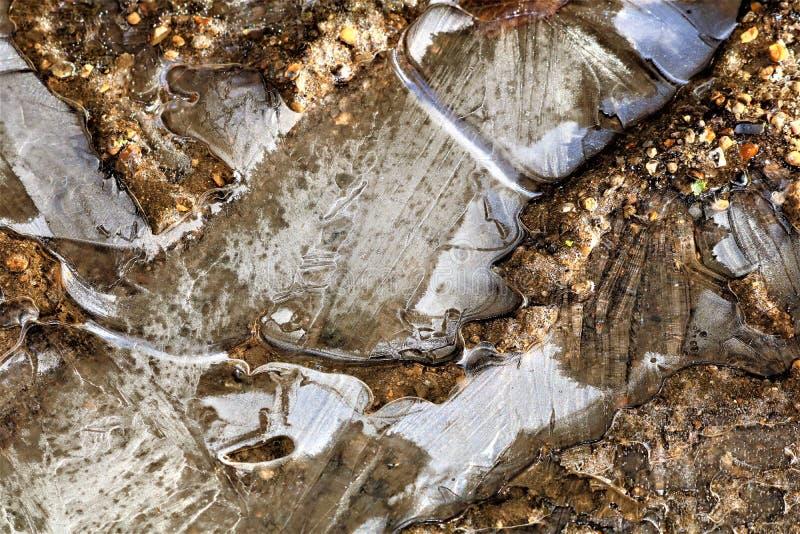 Замороженная лужица показывая красоту природы в зиме стоковые фотографии rf