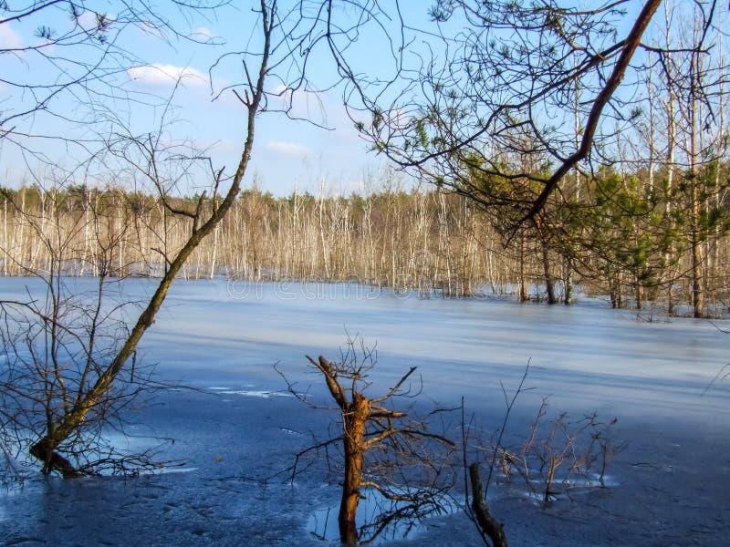 Замороженная поднятая трясина в парке Krajobrazowy Mazowiecki в Польше стоковое фото