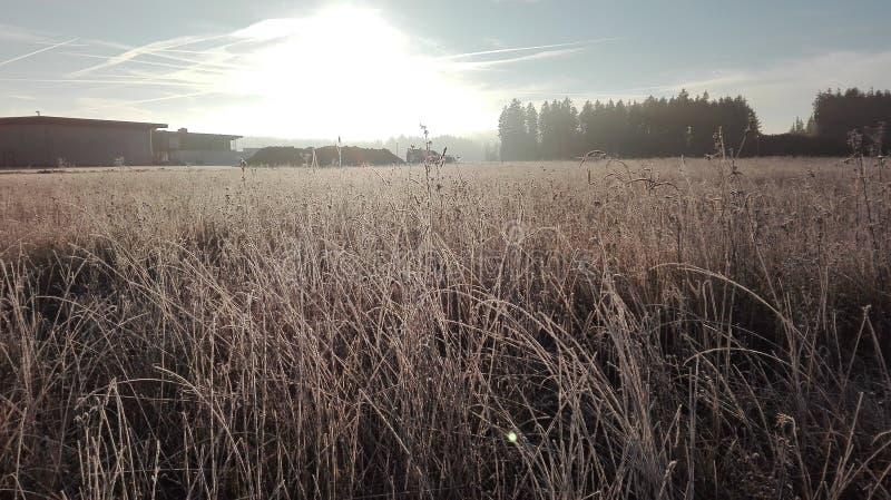 замороженная пшеница стоковая фотография