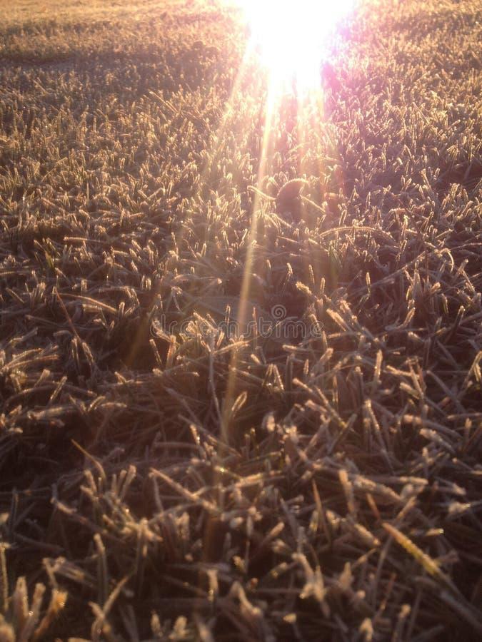 Замороженная трава стоковое фото