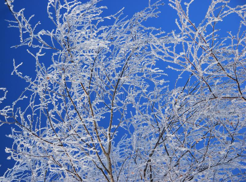 Замороженное дерево березы зимы против голубого неба стоковое изображение rf