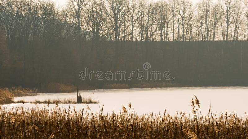Замороженное озеро и stub дерева стоковая фотография rf