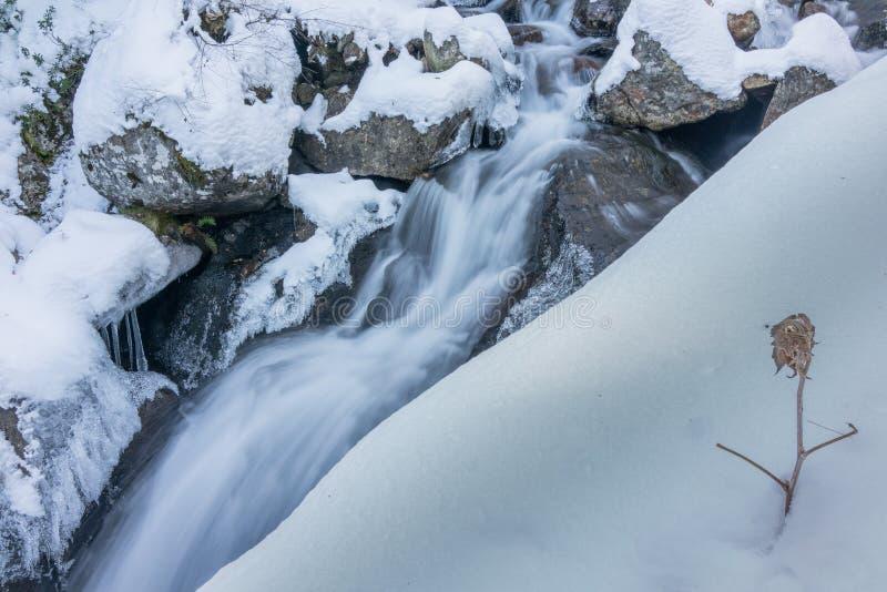 Замороженное растение в водопаде зимой стоковые изображения rf
