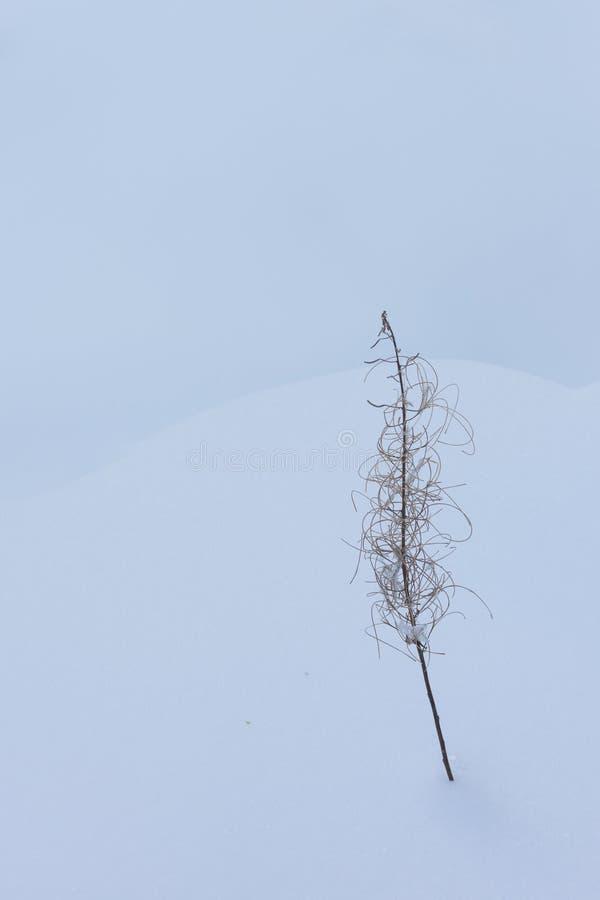 Замороженное растение в пустыне снега стоковая фотография rf