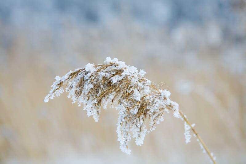 замороженное сено стоковые изображения rf
