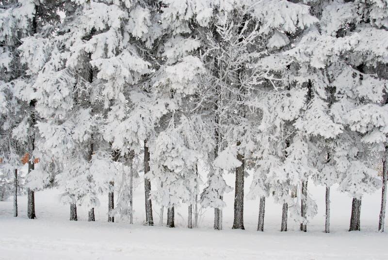 замороженные богато валы стоковые фотографии rf