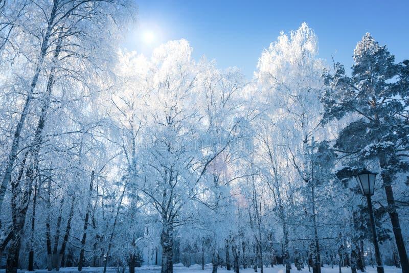 Замороженные ветви березы на ясный морозный день стоковые изображения rf