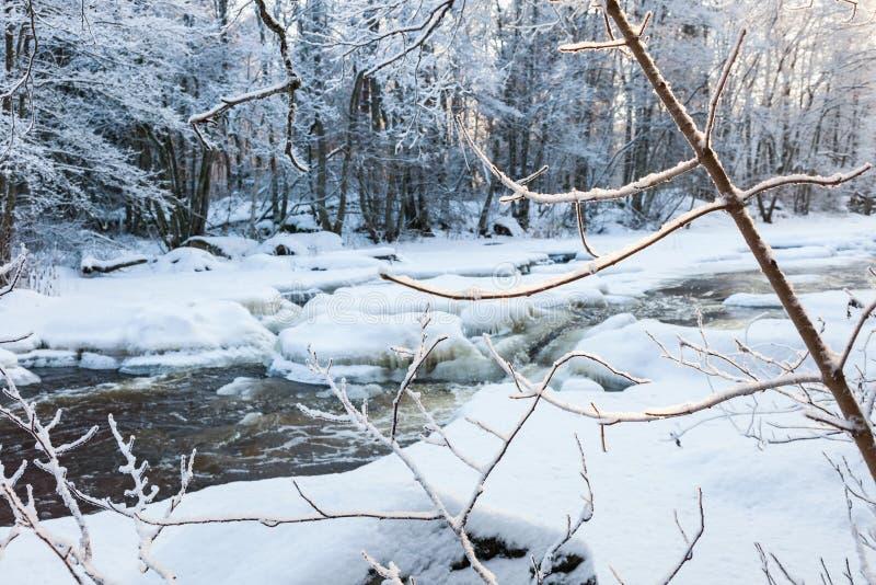 Download Замороженные ветви дерева на реке Стоковое Фото - изображение насчитывающей спокойно, гололедь: 81815028