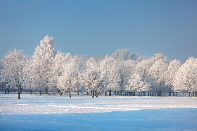 Замороженные деревья и трава против голубого неба стоковые изображения rf