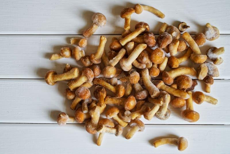 Замороженные дикие грибные грибы на белой естественной предпосылке стоковые изображения rf
