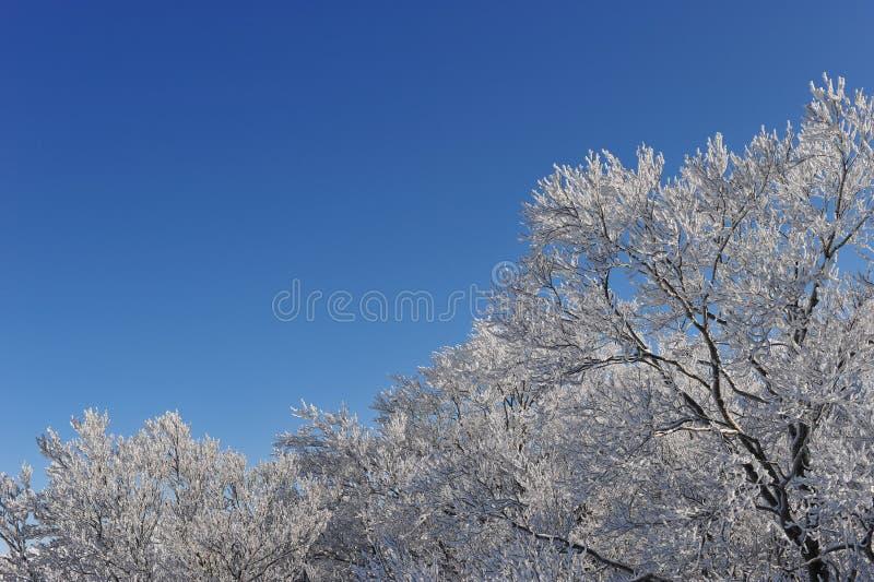 Замороженные деревья над горными вершинами горы в северной Японии стоковые изображения rf