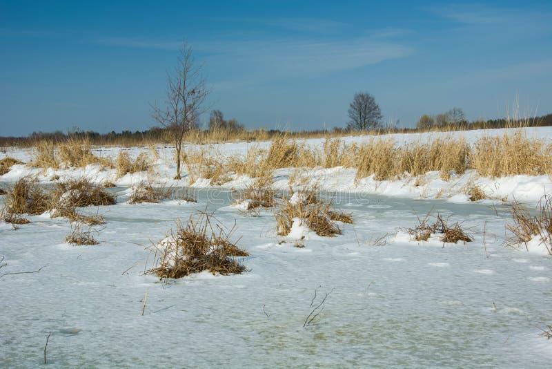 Замороженные заболоченные места в зимнем дне стоковые фото