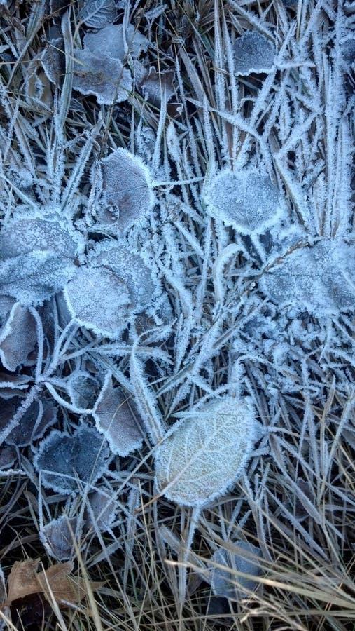 замороженные листья стоковое изображение