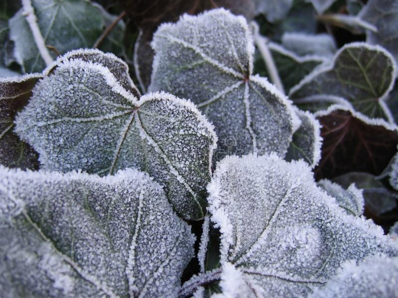 Download замороженные листья стоковое фото. изображение насчитывающей утро - 486826