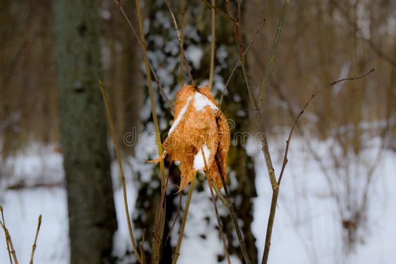 Замороженные лист в середине леса стоковые изображения rf