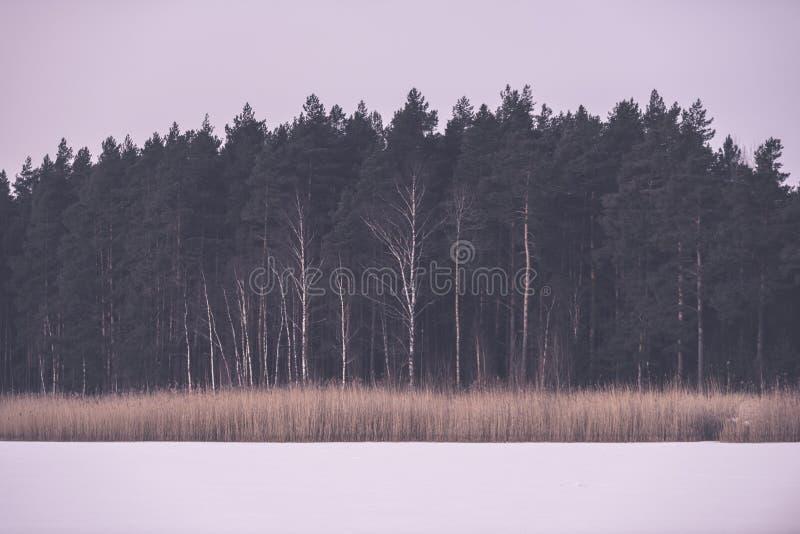 замороженные нагие лесные деревья в снежном ландшафте - винтажный ретро eff стоковая фотография rf