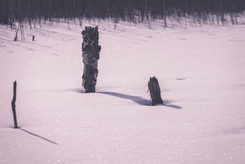 замороженные нагие сухие и мертвые лесные деревья в снежном ландшафте - vint стоковое изображение