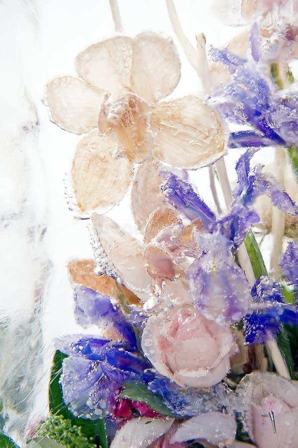 Замороженные орхидеи стоковые фото