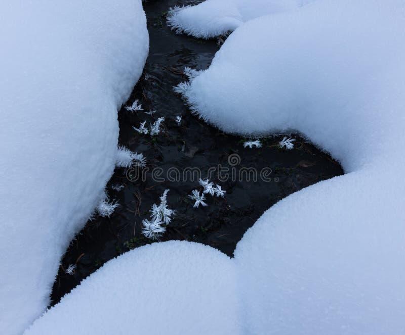 Замороженные растения в пустыне снега и льда стоковое изображение