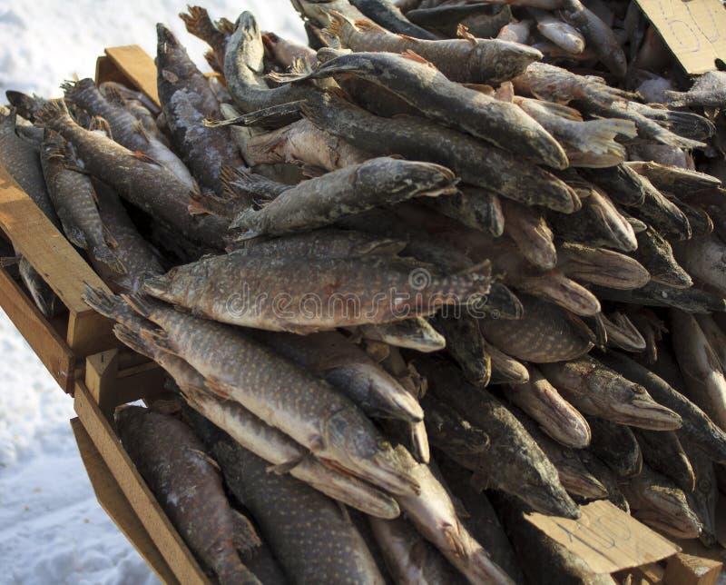 Замороженные рыбы в коробках на улице стоковые изображения rf