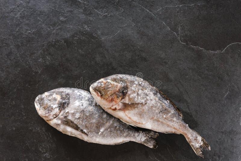 Замороженные рыбы dorado или лещ моря на предпосылке камня шифера Морепродукты, взгляд сверху, плоское положение, космос экземпля стоковые фотографии rf