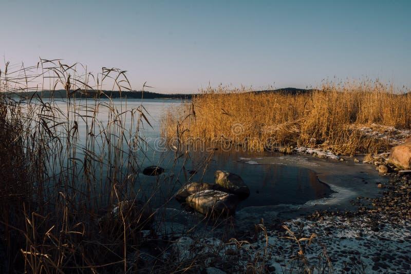 Замороженный берег озера стоковая фотография rf