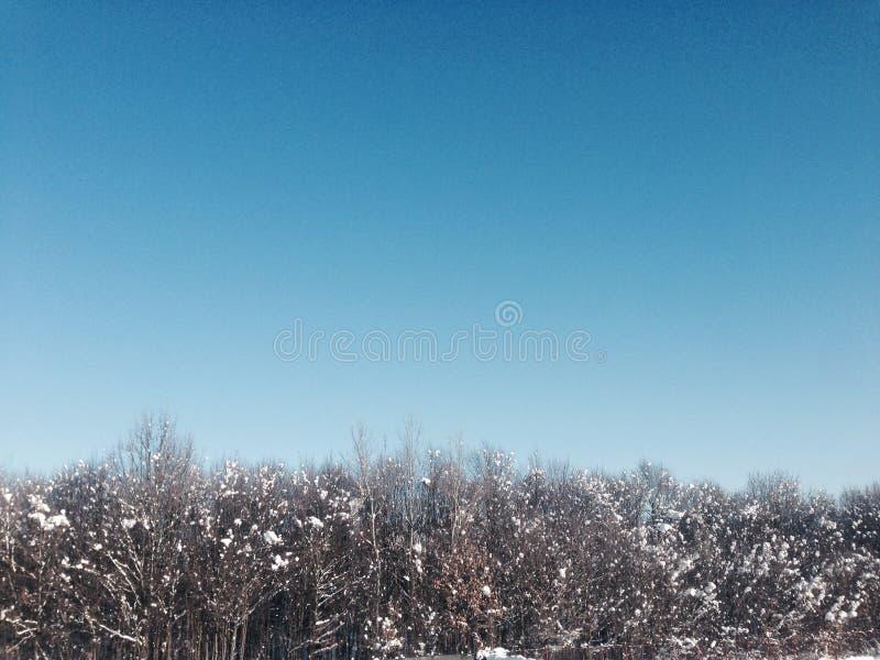 Замороженный лес стоковые фото