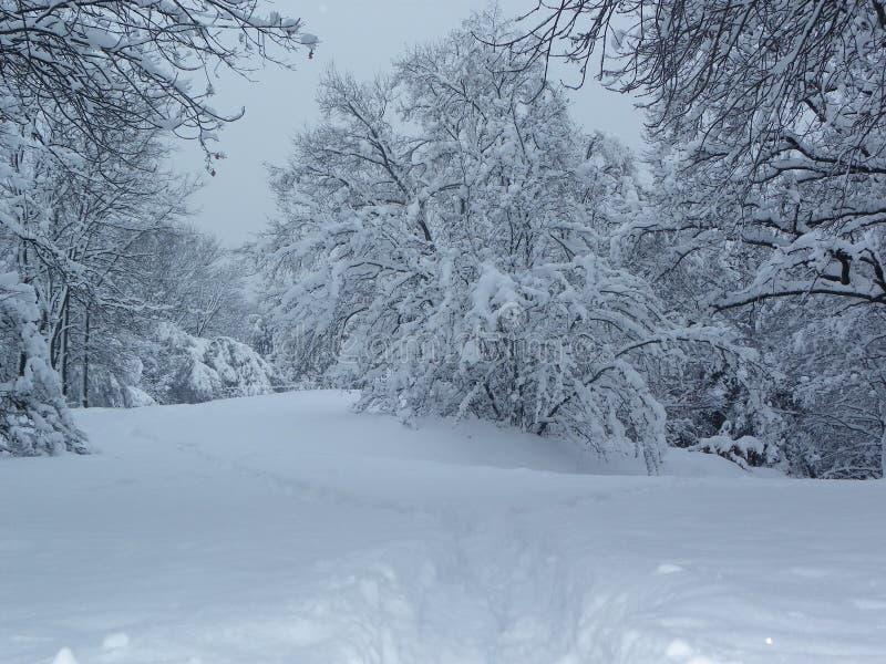 Замороженный лес стоковые изображения rf