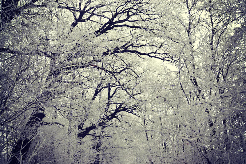Замороженный лес стоковые фотографии rf