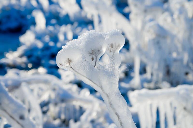 замороженный завод стоковое изображение