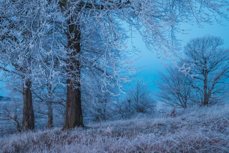 Замороженный лес в Шотландии стоковые фото