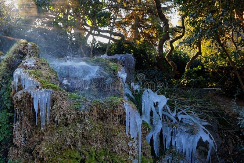 Замороженный малый водопад в древесинах стоковые изображения