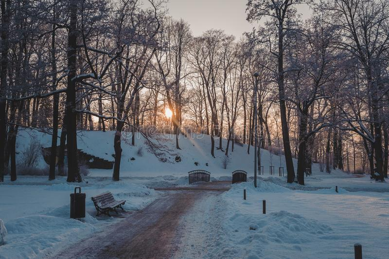 Замороженный парк в зиме под снегом Лучи солнца выходят сквозь отверстие ветви деревья стоковая фотография